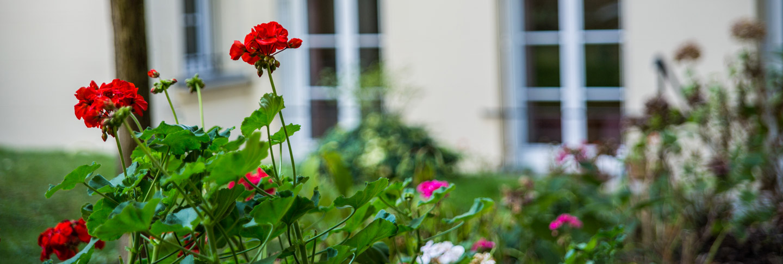 Parterre de fleurs dans le jardin privatif de la maison de retraite M.Carters de l'Agefo, Paris (75015)